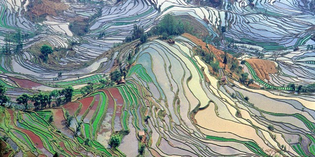 Coltivazione del riso nello Yunnan