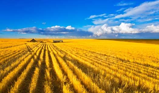 Ukraine agriculture field