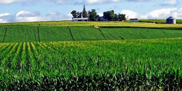 Iowa Corn Fields